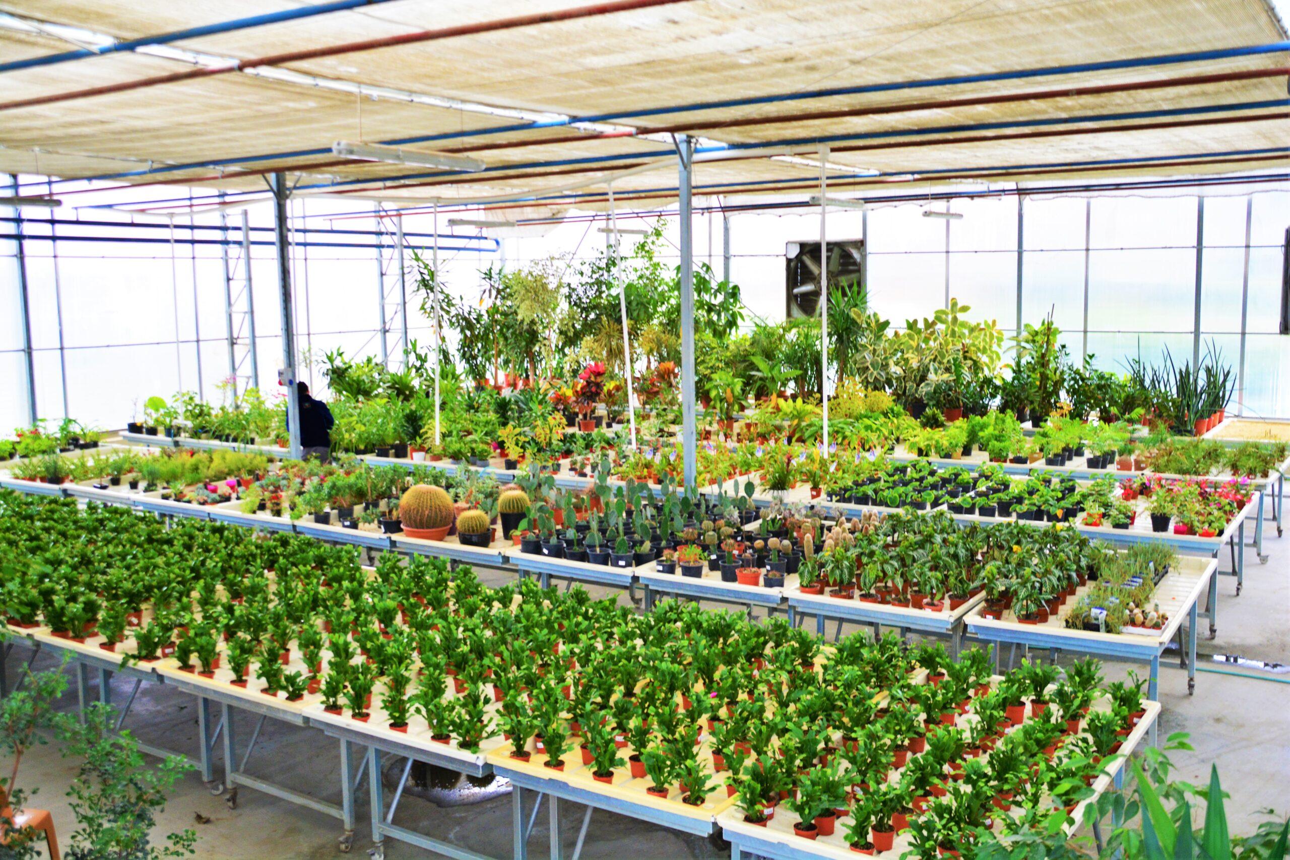 İstanbul Süs Bitkileri Araştırma ve Deneme Merkezi