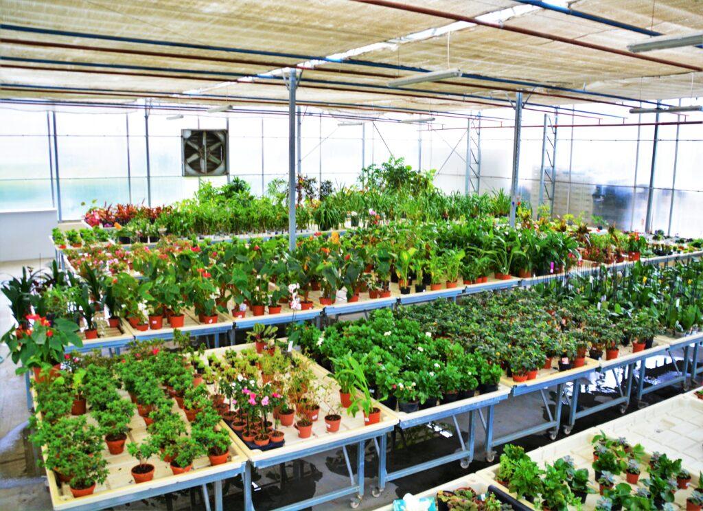 Süs Bitkileri Araştırma ve Deneme Merkezi
