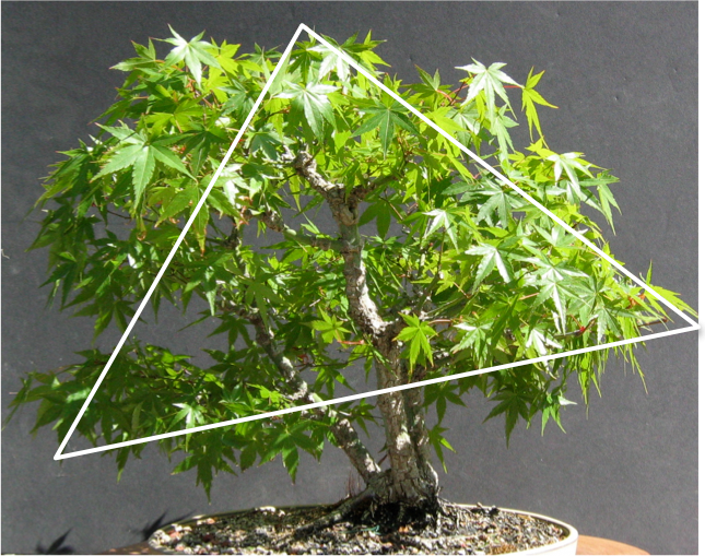 Bonsai Ağacı ve Bonsai Felsefesi